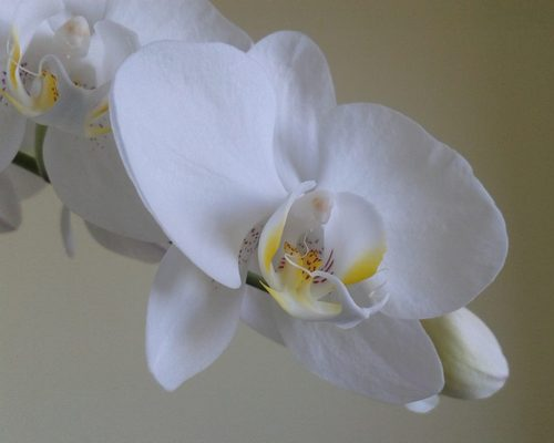 yoga-science-de-vie-orchidee